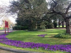 Repton Park in bloom